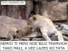 LAZES MALI